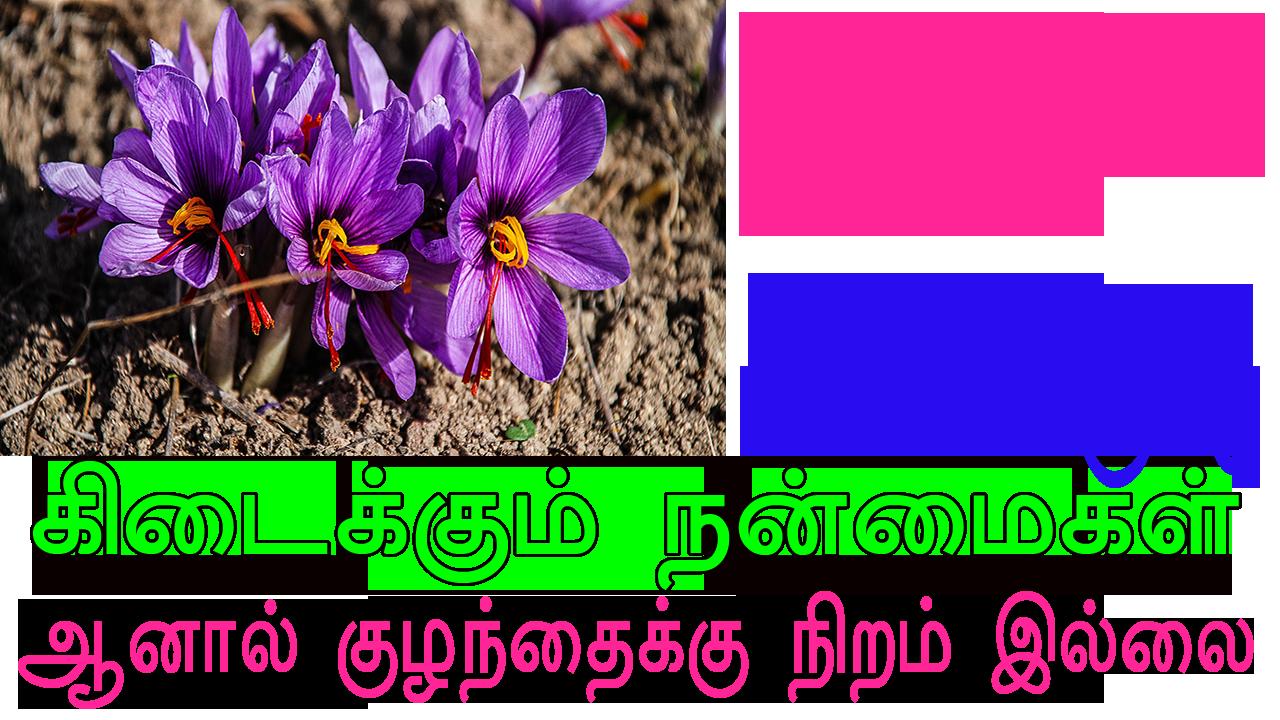 Saffron,saffron price,saffron spice,saffron threads,saffron benefits,spanish saffron,saffron extract,buy saffron,saffron powder,best saffron,saffron plant,original saffron price,